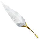 feathered quill
